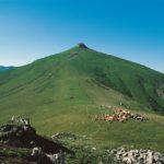 La flore de nos montagnes est la composante principale du goût.