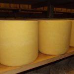 Après 48 heures sous presse, les fromages sont mis en cave.